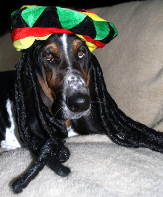 Norm in his ziggy marley hat