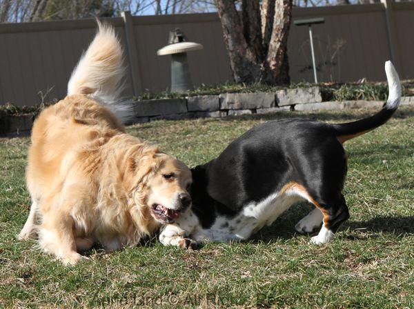 playing with tucker