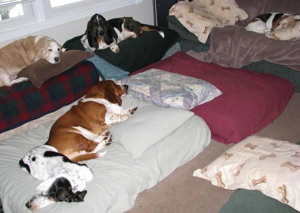 group nap